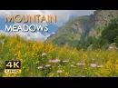 4K Mountain Meadows - Cricket Grasshopper Sounds - Wild Flowers - Relaxing Nature Video - Ultra HD