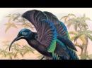 David Attenborough on Sharpe's Birds of Paradise | The Folio Society