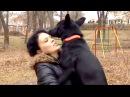 Собака на сломанных лапах прошла 300 километров чтобы вернуться к хозяйке