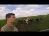 ПАЦАН ГОНИТ.Круто зовет коров)))просто уматный чел..Ржачно до слез,угарное видео 2017
