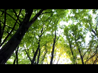Пение птиц, Коломенское. Май 2017