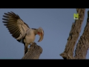 «Дикие белые львицы 1. Наперекор судьбе» Документальный, природа, животные, 2012