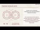 16. Различия в строении прокариот и эукариот