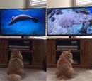 Документалки про живую природу - любимое увлечение моего кота. Он всегда следит за тем…
