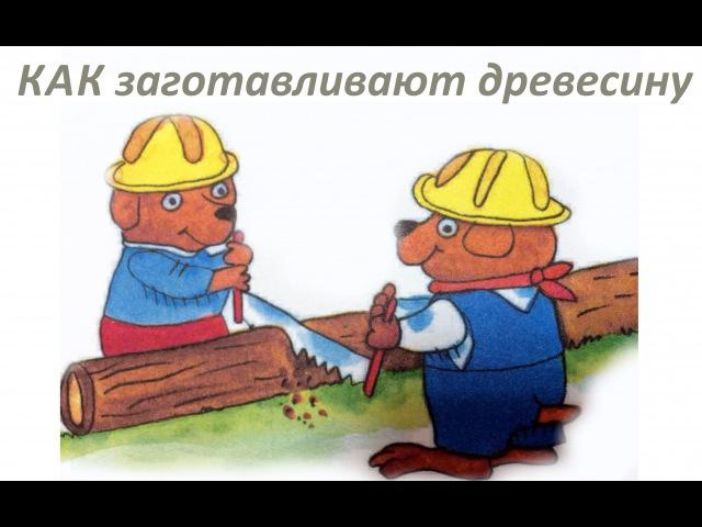 Как заготавливают древесину и что делают из дерева Обучающее видео для детей