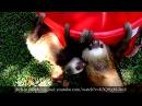 Правдивые факты о ленивцах