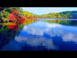 4k Japan Autumn leaves Nature Healing Relaxation