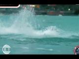 Фелпс VS Белая акула