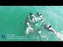 TEAM TRIP ORCA SAFARI IN KAMCHATKA RUSSIA