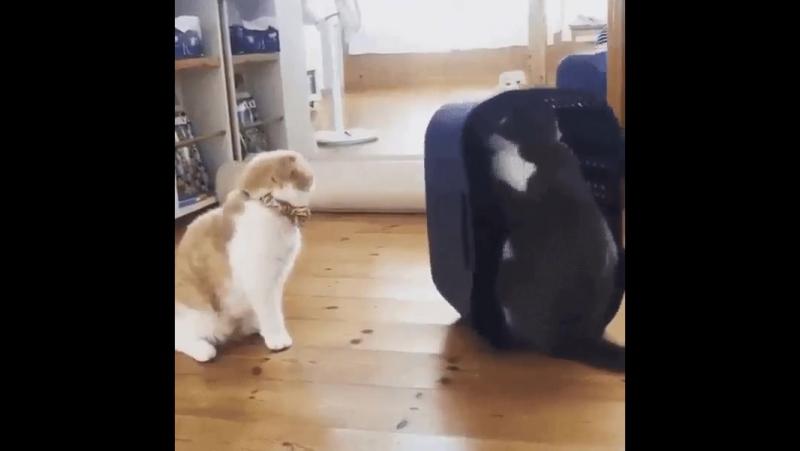 Долбанутый кот