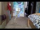 Танцюющий скелет в мене в комнаті Приколи