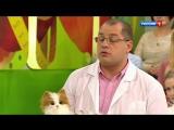 Аллергия на кошек (