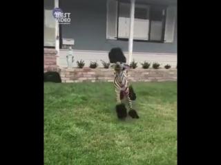 Да это же зебра из Мадагаскара, а нет...просто песик