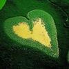 🍃 Прекрасная Зелёная 🍃