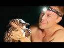 Дикая жизнь с Тимом Фолкнером The Wild Life of Tim Faulkner 2013 22