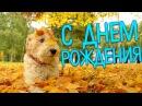Красивое Поздравления с Днем Рождения в Ноябре. Видео открытка на День Рождения ...