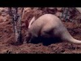 Animals of the World - Aardvark