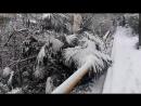 Пальмы в снегу.