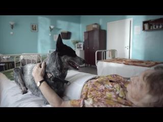 Фильм о любви, снятый собаками- A film about love, shot by dogs