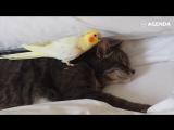 Котики и попугаи