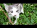 Дикий котенок впервые видит человека