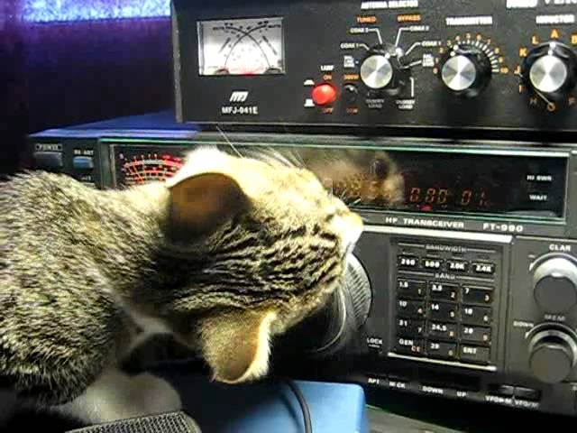 Vaavi-cat playing with HF-radio