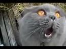 1. Кот напился валерьянки и горланит песни.