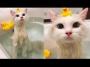 Cat Bathing With Rubber Ducks