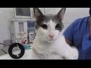 Почему кошкам нельзя давать играть с нитками и иголками