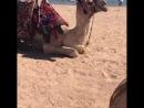 🐪🌴🙈😍☀️🇪🇬🌊 🏝🇪🇬☀️💚🌴Маленький ШАРМ эль ШЕЙХ покупает себе верблюда) sharmelsheik