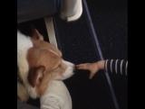 Алексей Воробьев: Счастливый ребёнок и суперзвезда рейса «Ванкувер-Лос Анджелес» #ЭлвисМэлвис 🐶✈️👼🏼 21.11.2017