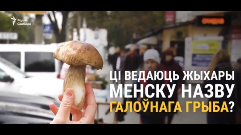 Як па-беларуску завецца самы галоўны грыб