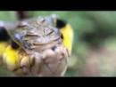 Гусеница, которая от страха превращается в змею