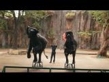 Паттайя. Тигровый зоопарк Сирача. Что посетить в Паттайе
