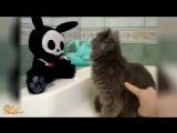Самые забавные кошки  А жизнь кота опасна и смешна