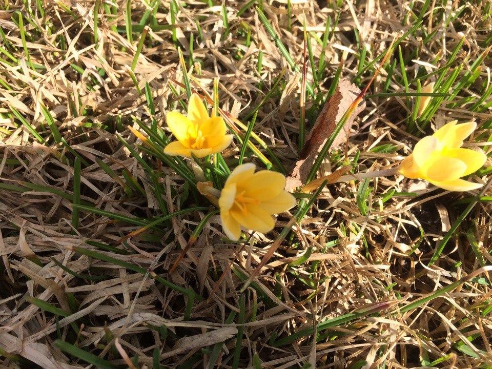 цветы парк горького