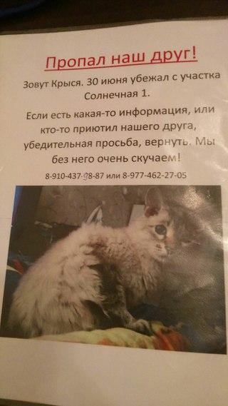 Проститутки петропавловска республика казахстан