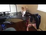 Как отучить кота лазить по столу)
