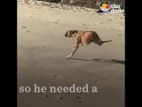 Дункан! Пес сильный духом!