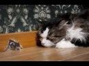 Смешные кошки приколы про кошек и котов 2017 62 Котики под валерьянкой