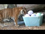 Big Cat Rescue Easter EGGstravaganza!!