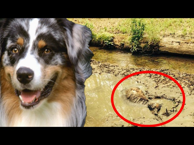 Dog rescue compilation: amazing dog rescue; police save dog; dog in hot car; drowning dog more