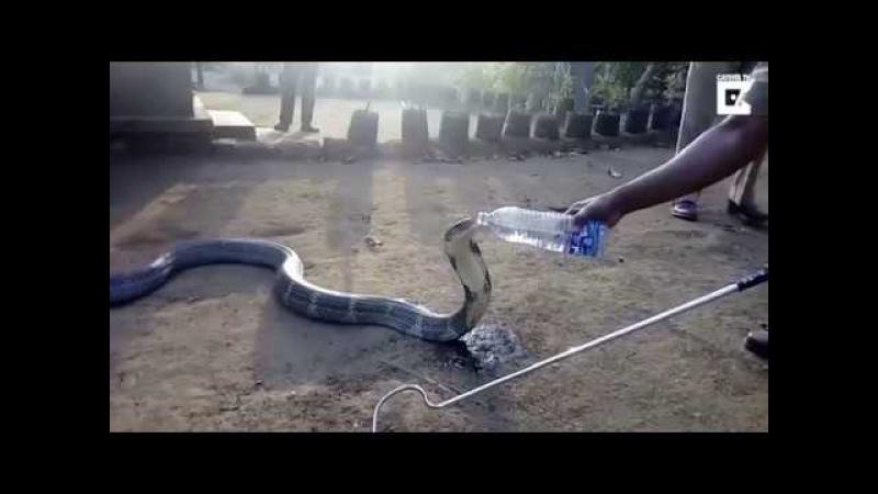 Из за засухи кобра пришла к людям просить воды