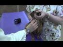 Пункция ярёмной вены у маленькой собаки / Picking up and Restraint for a Jugular Venipuncture Small Dog