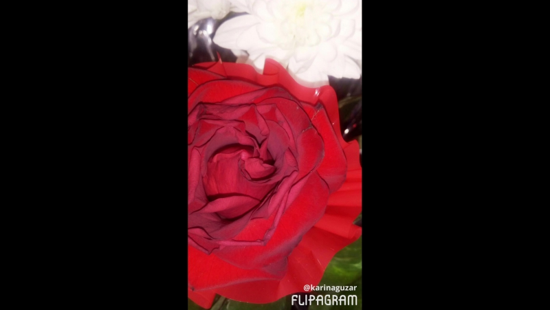 Роза роза сөю гөле  Кем урлады миннән сине?  Оныта алмыйм  Роза гөлкәем  Роза гөлкәем