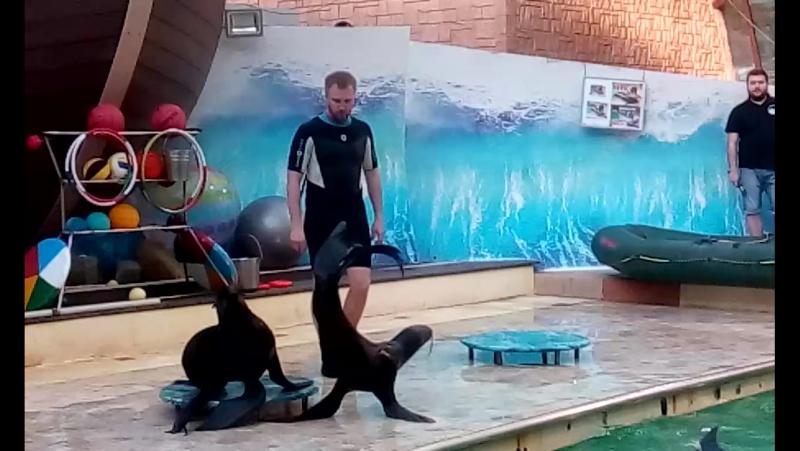 танцы морских котиков Димы и Вовы в ростовском дельфинарии 28 05 17