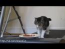 Кот на беговой дорожке