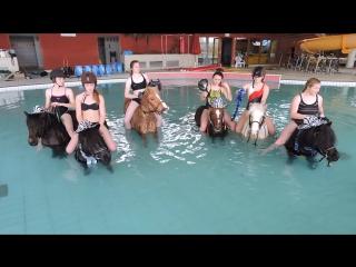 Des poneys dans la piscine - vidéo dailymotion-1