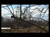 18.04.2017 Зимняя погода не покидает Ленинградскую область