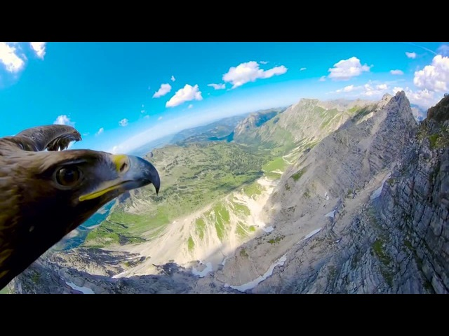Eagles Eyes in the Alps · coub, коуб
